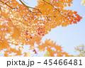 紅葉と青空 45466481