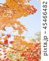 紅葉と青空 45466482