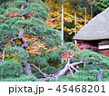 秋の紅葉 45468201