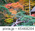 秋の紅葉 45468204