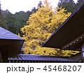 秋の紅葉 45468207