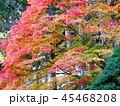 秋の紅葉 45468208