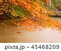 秋の紅葉 45468209