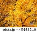 秋の紅葉 45468210