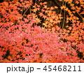 秋の紅葉 45468211