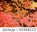 秋の紅葉 45468213