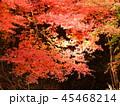 秋の紅葉 45468214