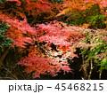 秋の紅葉 45468215