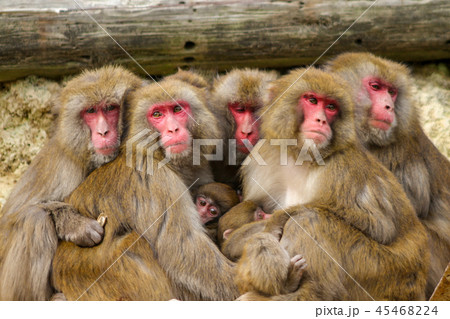 猿の親子 45468224