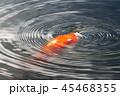 鯉と水輪 45468355