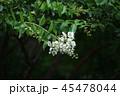 山の森の花 45478044
