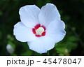 白い花 45478047