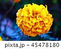 黄色の花 45478180