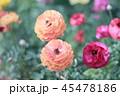 明るい花々 45478186