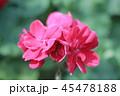 赤く開いた花 45478188