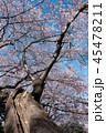 桜 ソメイヨシノ 満開の写真 45478211