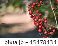 実 南天 果実の写真 45478434