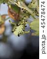 チュウレンジバチの幼虫 45478474
