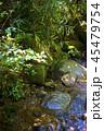 ボルネオ島ジャングル 清流 45479754
