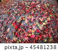 濡れる落ち葉 45481238
