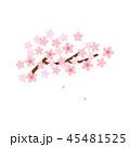 素材-桜 45481525