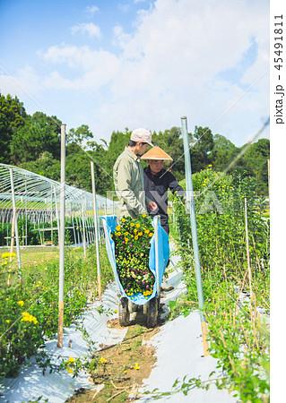 花卉栽培 農業 男性 45491811