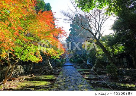 朝日が差し込む、英彦山神宮への参道(秋に撮影) 45500397