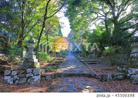 朝日が差し込む、英彦山神宮への参道(秋に撮影) 45500398