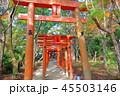 竈門神社 神社 秋の写真 45503146