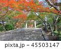竈門神社 秋 紅葉の写真 45503147