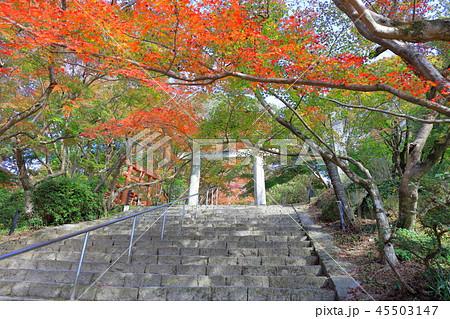 竈門神社(かまどじんじゃ) 福岡県太宰府市 45503147