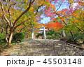 竈門神社 秋 紅葉の写真 45503148