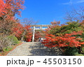竈門神社 秋 紅葉の写真 45503150