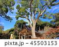 竈門神社 神社 宝満宮竈門神社の写真 45503153