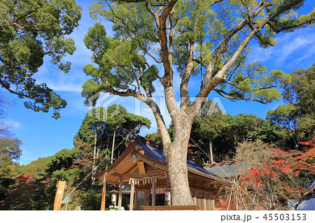 竈門神社(かまどじんじゃ) 福岡県太宰府市 45503153