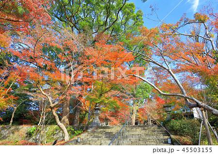 竈門神社(かまどじんじゃ) 福岡県太宰府市 45503155