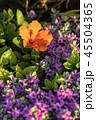 お花 フラワー 咲く花の写真 45504365