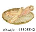 水彩画 蓮根 野菜のイラスト 45505542