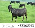 黒毛和牛 45508543