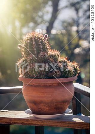 Details of tne cactus in sunlight 45518459