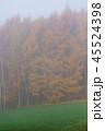 朝霧 就実の丘 早朝の写真 45524398