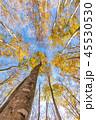 美人林 秋 紅葉の写真 45530530
