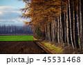 風景 秋 紅葉の写真 45531468
