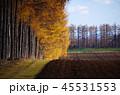 風景 秋 紅葉の写真 45531553