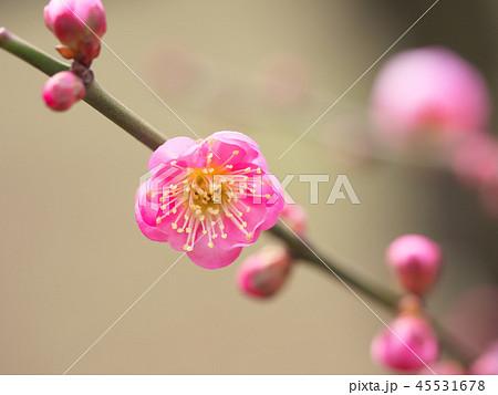 梅の花・春の誘い 45531678