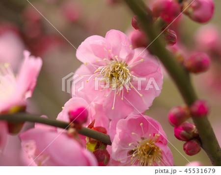 梅の花・春の誘い 45531679