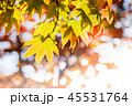 Fall and Autumn Season Concept, Look above the Sky 45531764