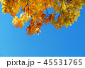 Fall and Autumn Season Concept, Look above the Sky 45531765