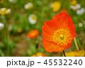オレンジ アップ 花の写真 45532240