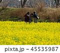 菜の花畑を背後に 45535987